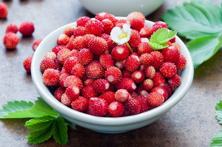Šumska jagoda u službi zdravlja