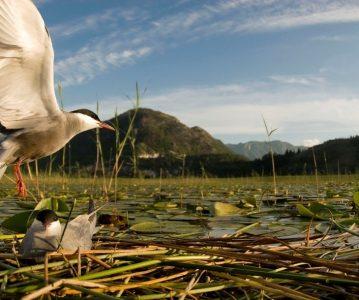 Biološko bogatstvo Bosne i Hercegovine