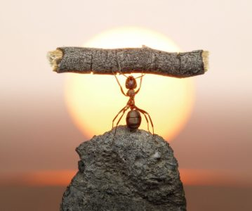 Vjernik i mrav: Pasivno posmatranje kriminala