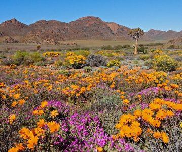 Namaqualand – Afrički pustinjski vrt