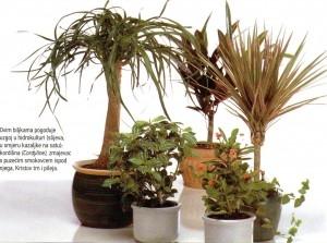 Uzgoj biljaka u vodi – hidrokultura