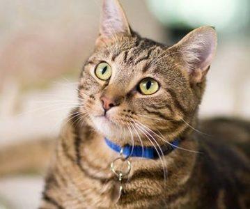 Zašto mačke imaju vertikalne zjenice?