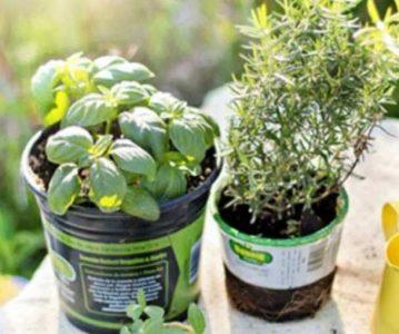 Zacinsko i ljekovito bilje